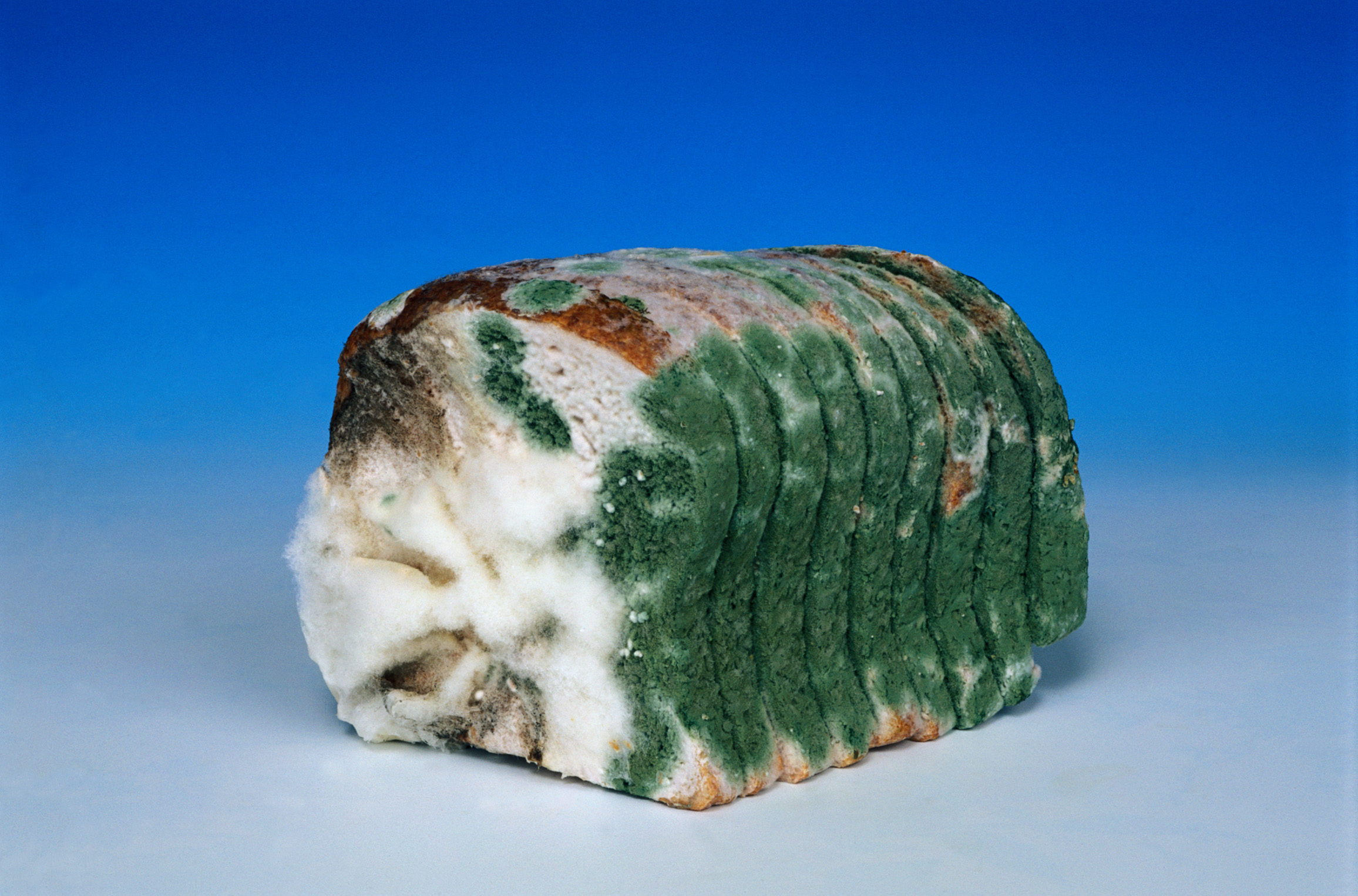 Why Mold Build Up Can Cause Your Other Foods To Go Bad And Start To Smell